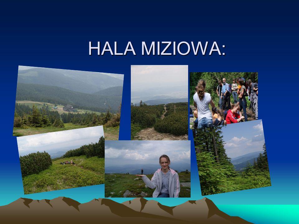 HALA MIZIOWA: