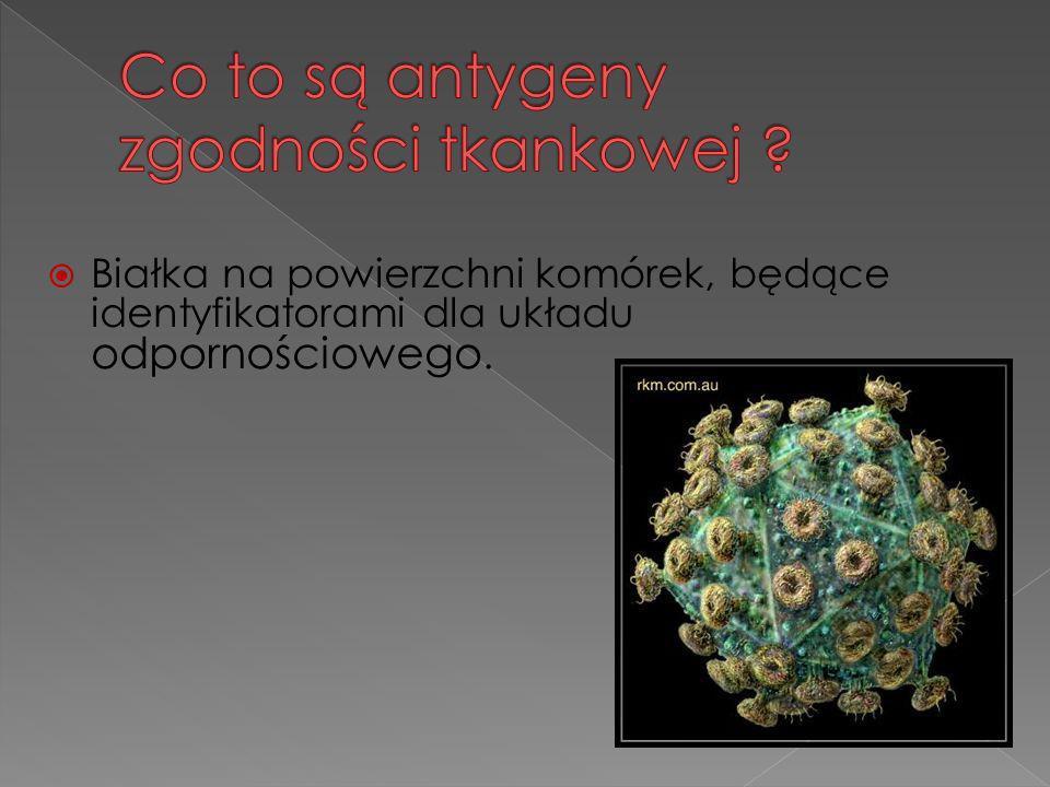 Co to są antygeny zgodności tkankowej