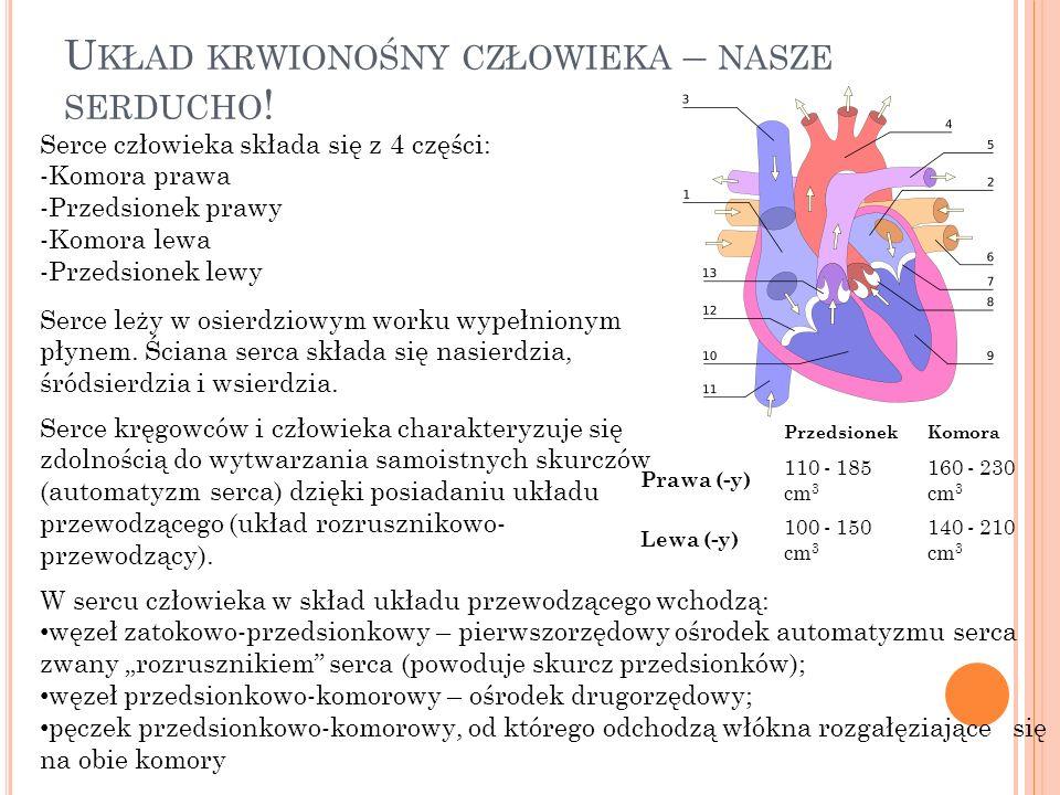Układ krwionośny człowieka – nasze serducho!