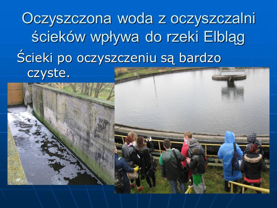 Oczyszczona woda z oczyszczalni ścieków wpływa do rzeki Elbląg