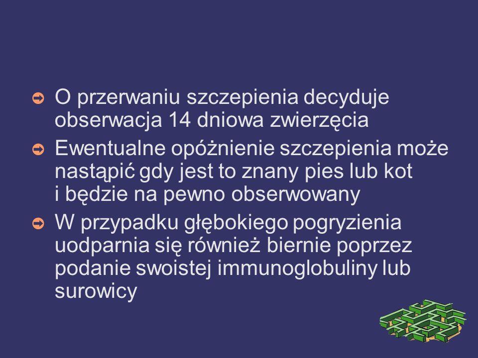 O przerwaniu szczepienia decyduje obserwacja 14 dniowa zwierzęcia
