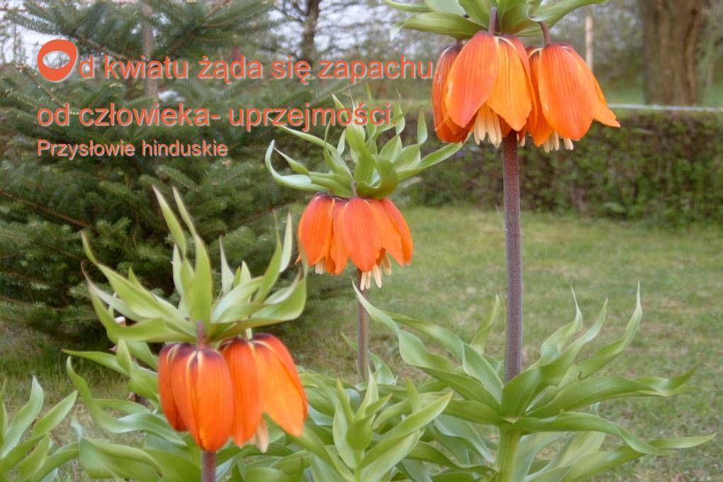 Od kwiatu żąda się zapachu, od człowieka- uprzejmości