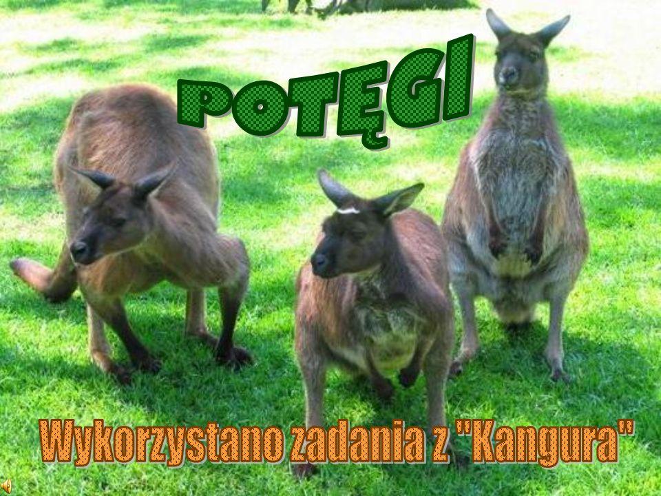 Wykorzystano zadania z Kangura