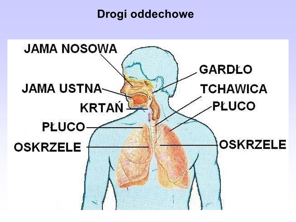 Drogi oddechowe