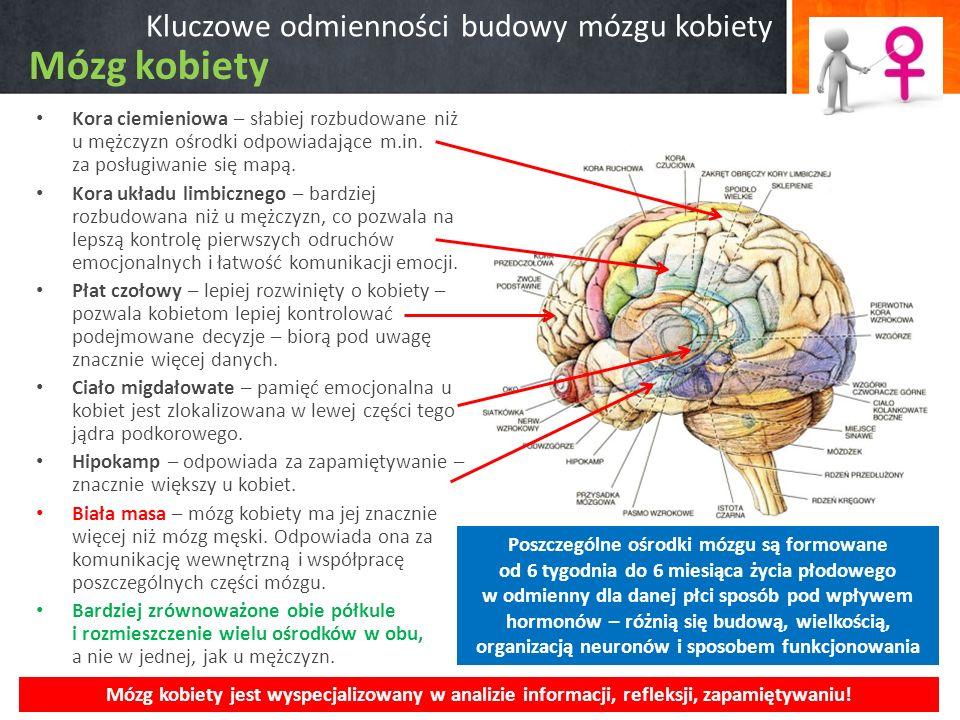 Kluczowe odmienności budowy mózgu kobiety