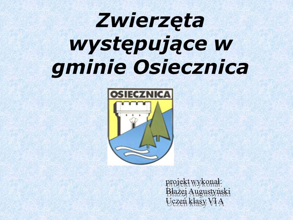 Zwierzęta występujące w gminie Osiecznica