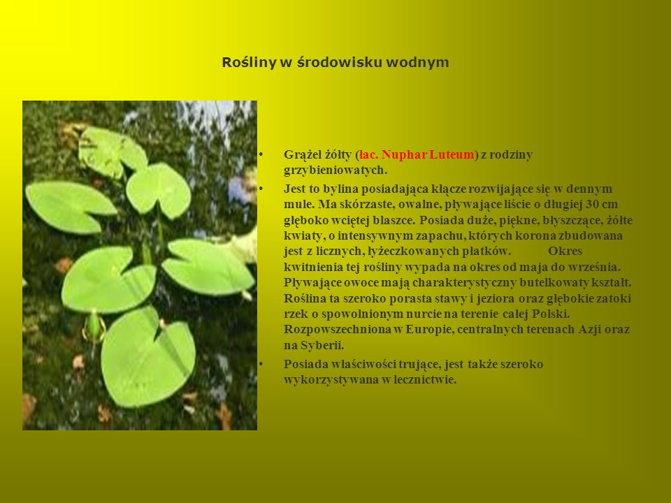 Rośliny w środowisku wodnym
