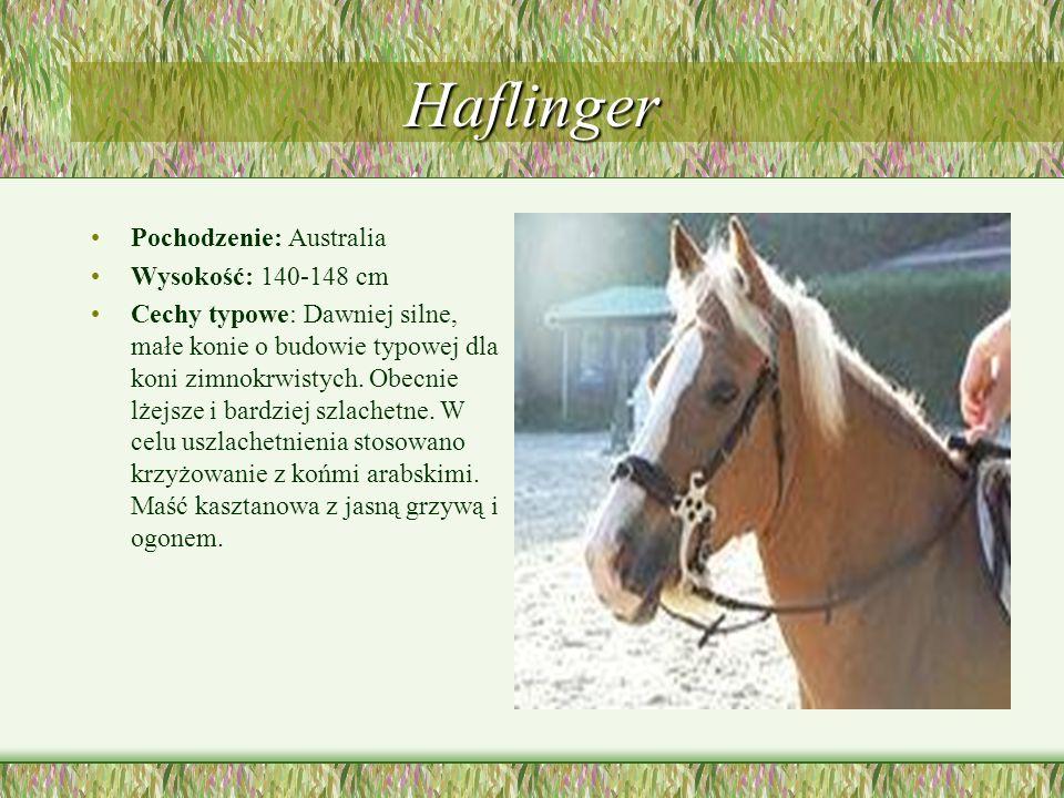 Haflinger Pochodzenie: Australia Wysokość: 140-148 cm