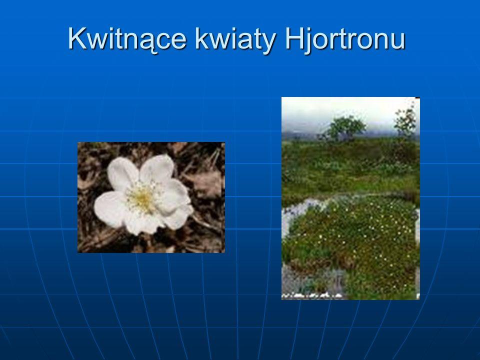 Kwitnące kwiaty Hjortronu