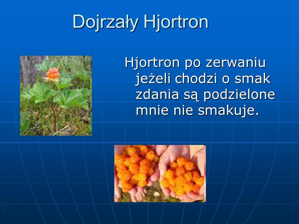 Dojrzały Hjortron Hjortron po zerwaniu jeżeli chodzi o smak zdania są podzielone mnie nie smakuje.