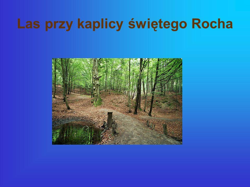 Las przy kaplicy świętego Rocha