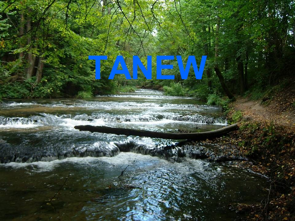 TANEW