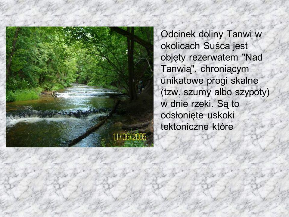 Odcinek doliny Tanwi w okolicach Suśca jest objęty rezerwatem Nad Tanwią , chroniącym unikatowe progi skalne (tzw.