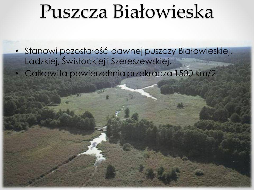 Puszcza Białowieska Stanowi pozostałość dawnej puszczy Białowieskiej, Ladzkiej, Świsłockiej i Szereszewskiej.