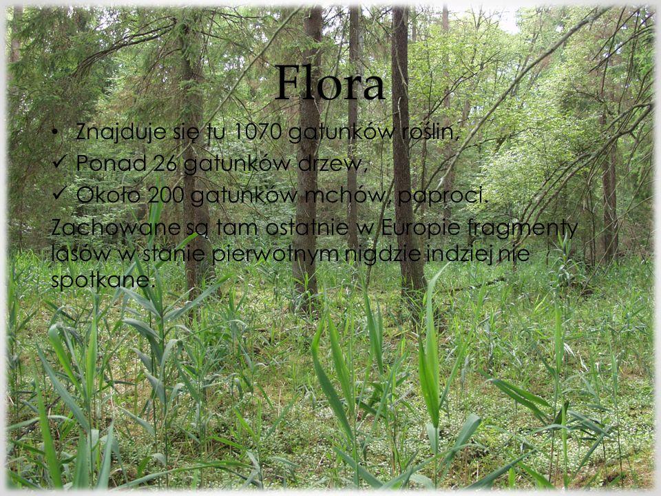 Flora Znajduje się tu 1070 gatunków roślin, Ponad 26 gatunków drzew,