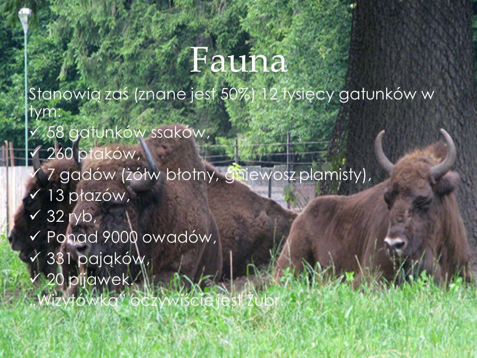 Fauna Stanowią zaś (znane jest 50%) 12 tysięcy gatunków w tym: