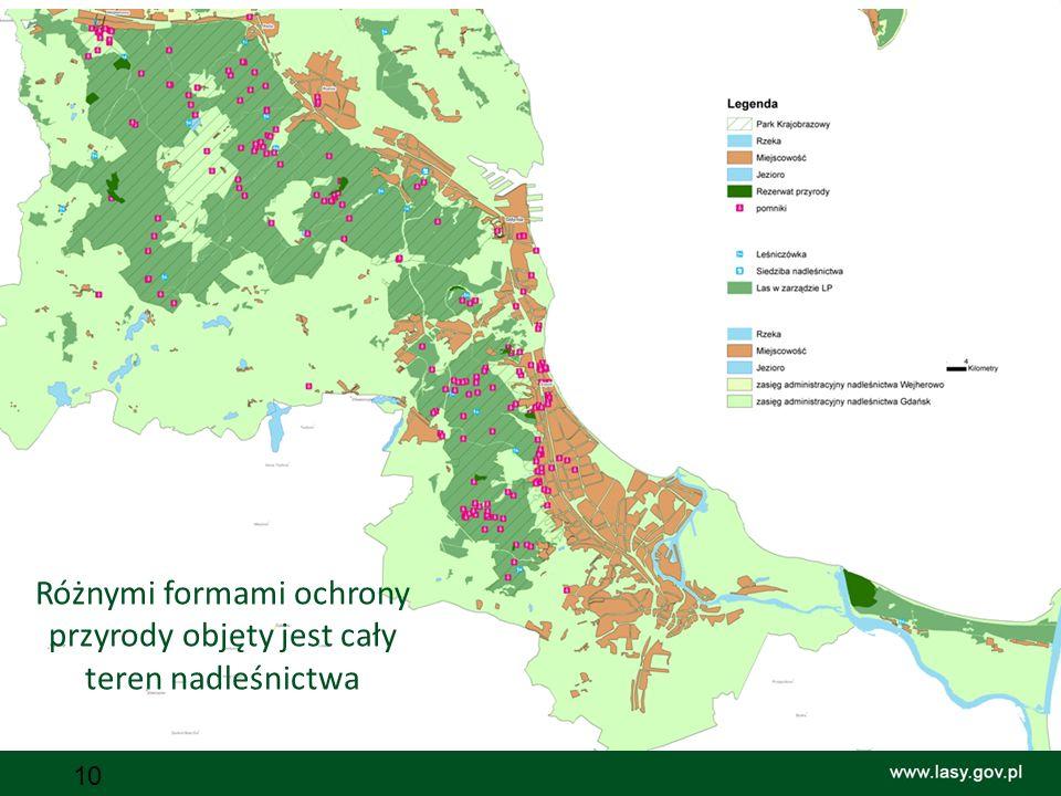 Różnymi formami ochrony przyrody objęty jest cały teren nadleśnictwa