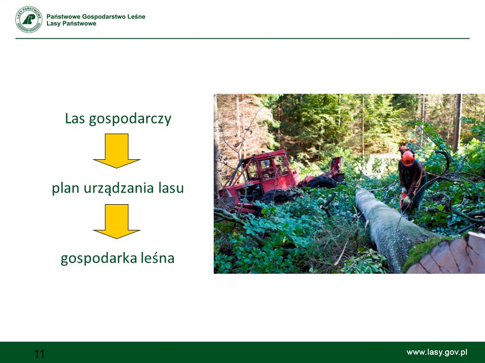 Las gospodarczy plan urządzania lasu gospodarka leśna