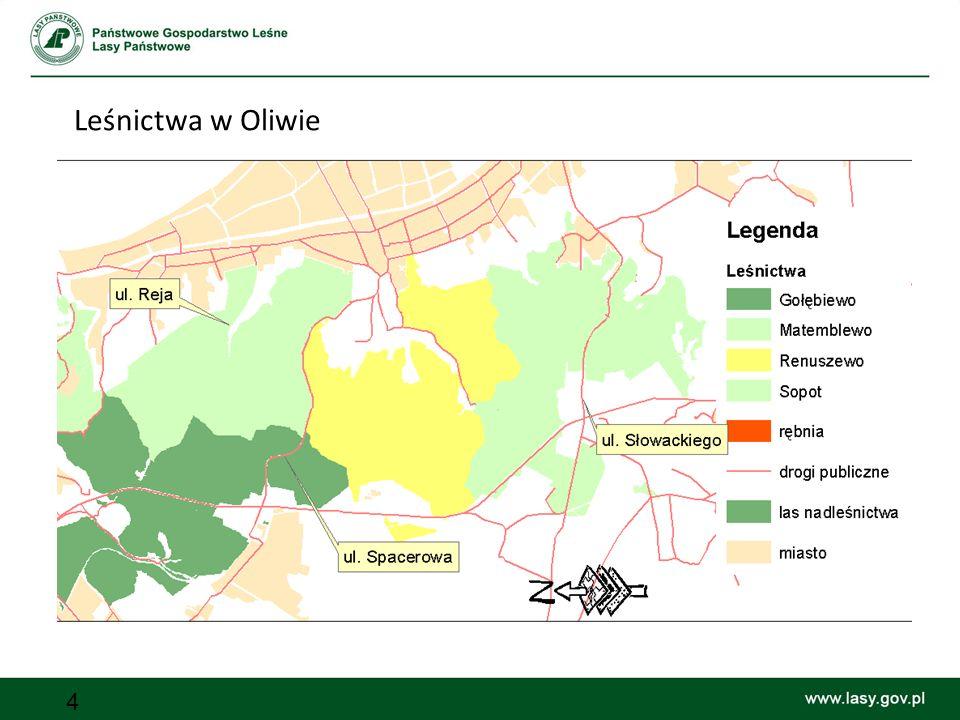 Leśnictwa w Oliwie