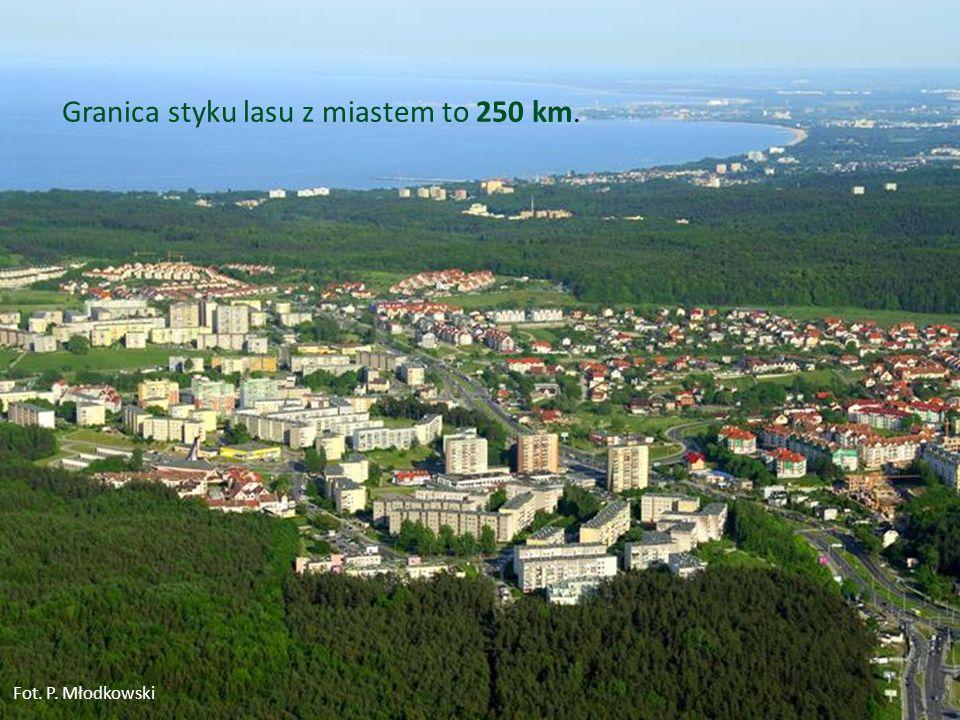 Granica styku lasu z miastem to 250 km.