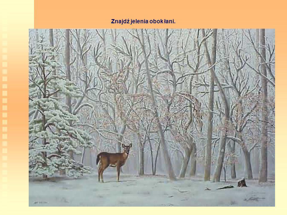 Znajdź jelenia obok łani.