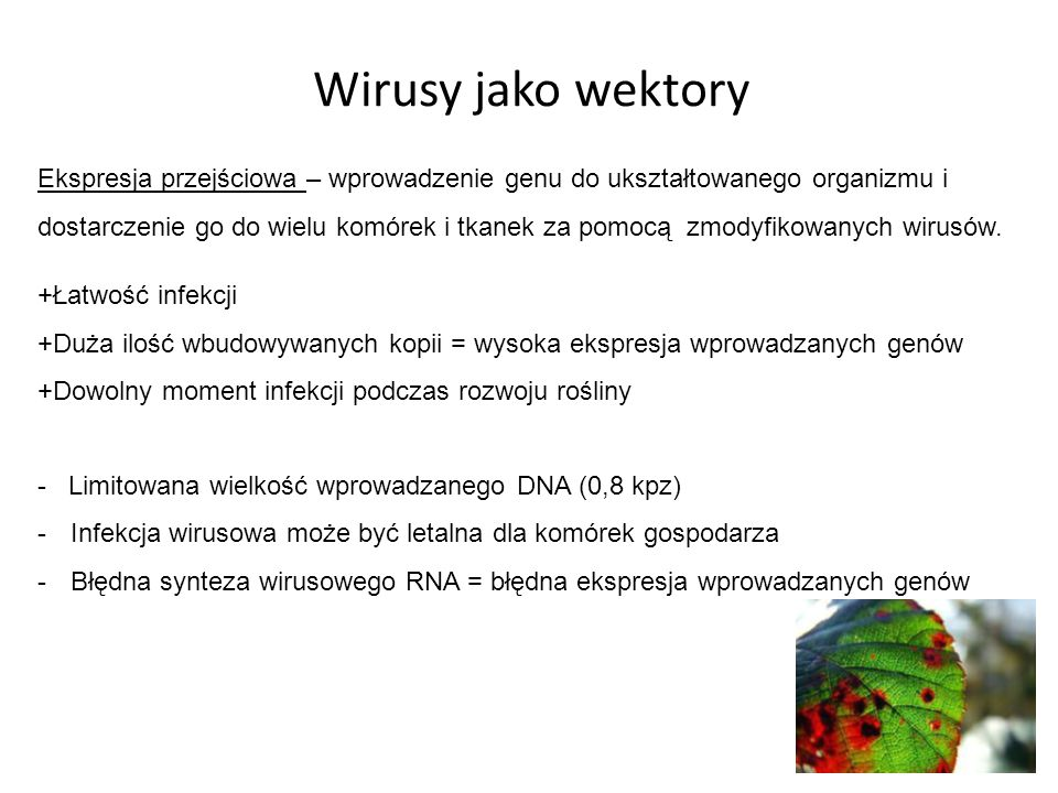 Wirusy jako wektory