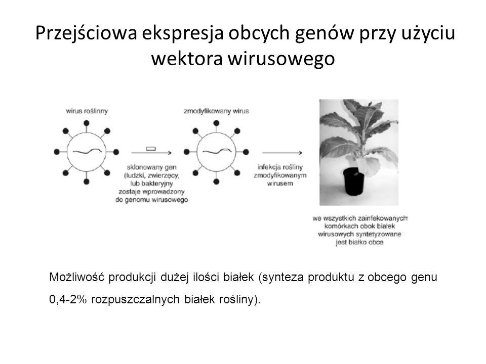 Przejściowa ekspresja obcych genów przy użyciu wektora wirusowego