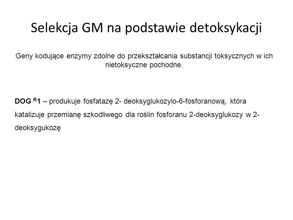 Selekcja GM na podstawie detoksykacji