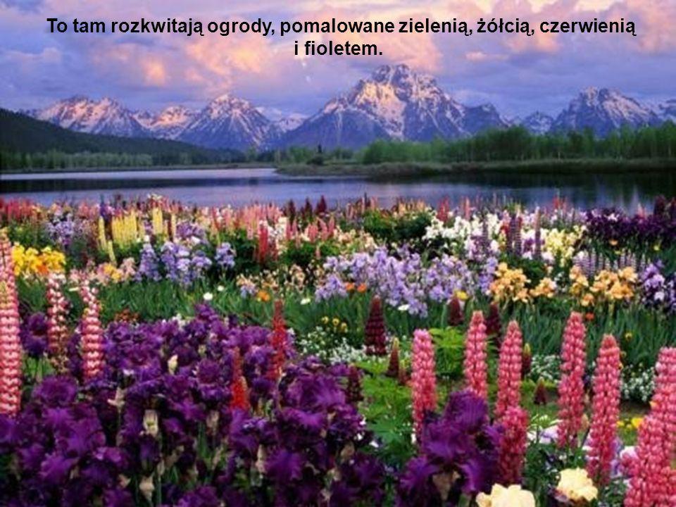 To tam rozkwitają ogrody, pomalowane zielenią, żółcią, czerwienią i fioletem.