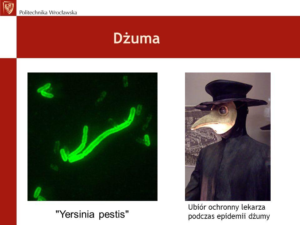 Dżuma Ubiór ochronny lekarza podczas epidemii dżumy Yersinia pestis