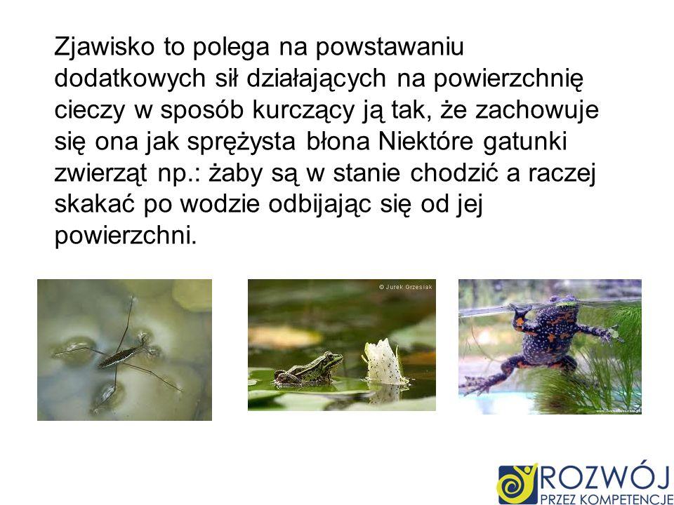 Zjawisko to polega na powstawaniu dodatkowych sił działających na powierzchnię cieczy w sposób kurczący ją tak, że zachowuje się ona jak sprężysta błona Niektóre gatunki zwierząt np.: żaby są w stanie chodzić a raczej skakać po wodzie odbijając się od jej powierzchni.