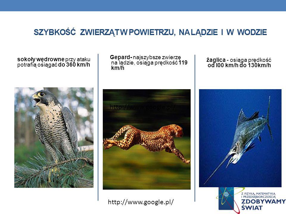 Szybkość zwierząt w powietrzu, na lądzie i w wodzie