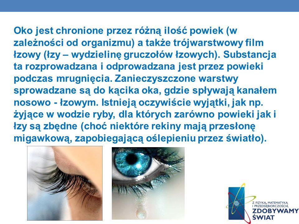 Oko jest chronione przez różną ilość powiek (w zależności od organizmu) a także trójwarstwowy film łzowy (łzy – wydzielinę gruczołów łzowych).