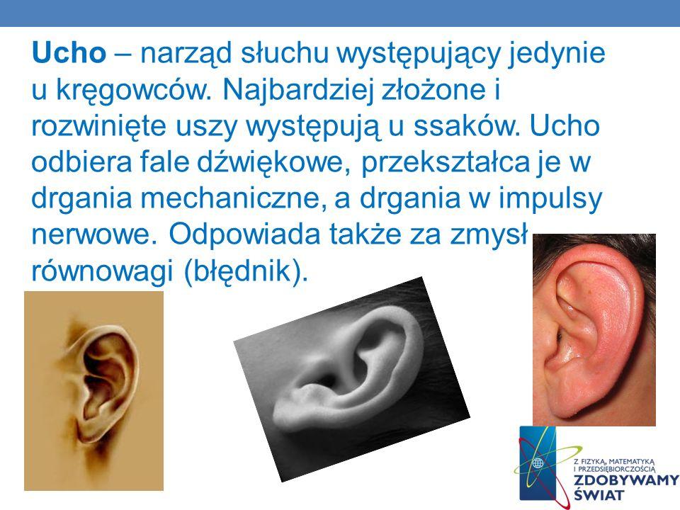 Ucho – narząd słuchu występujący jedynie u kręgowców