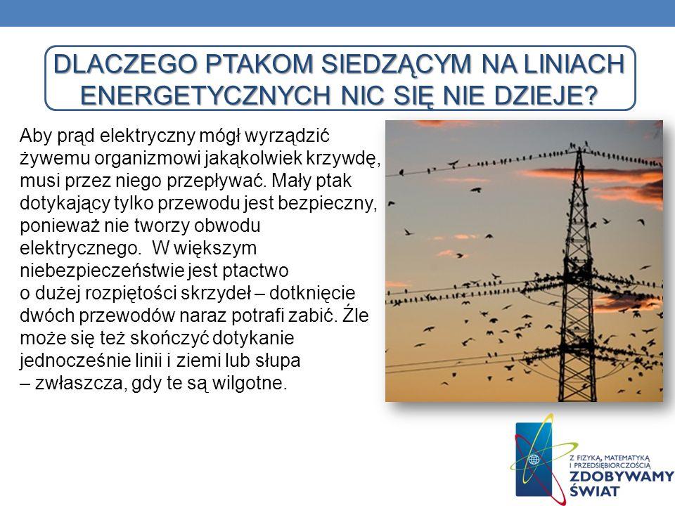 Dlaczego ptakom siedzącym na liniach energetycznych nic się nie dzieje