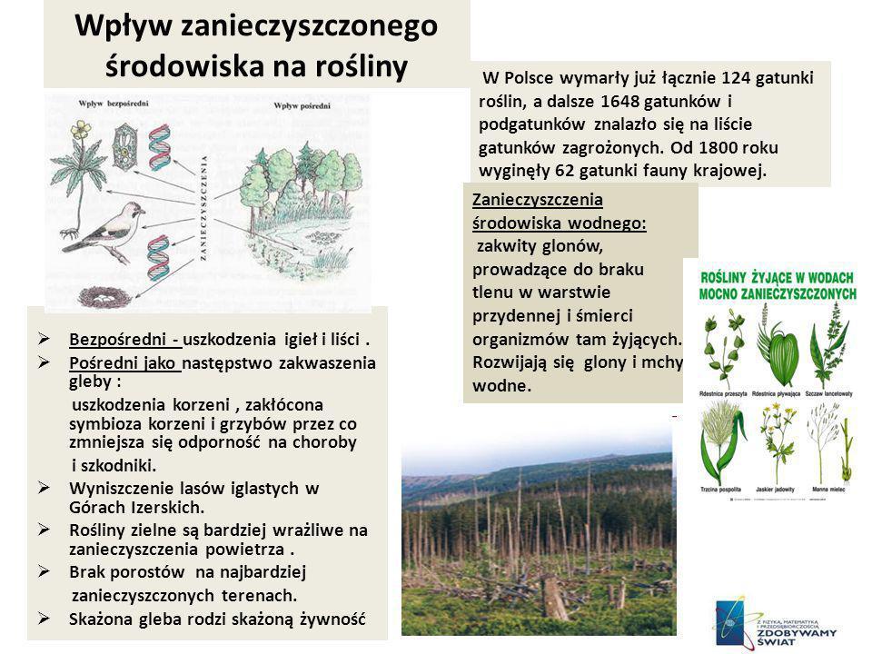 Wpływ zanieczyszczonego środowiska na rośliny