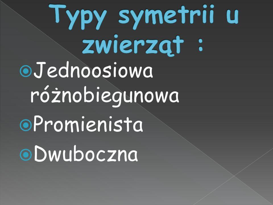 Typy symetrii u zwierząt :