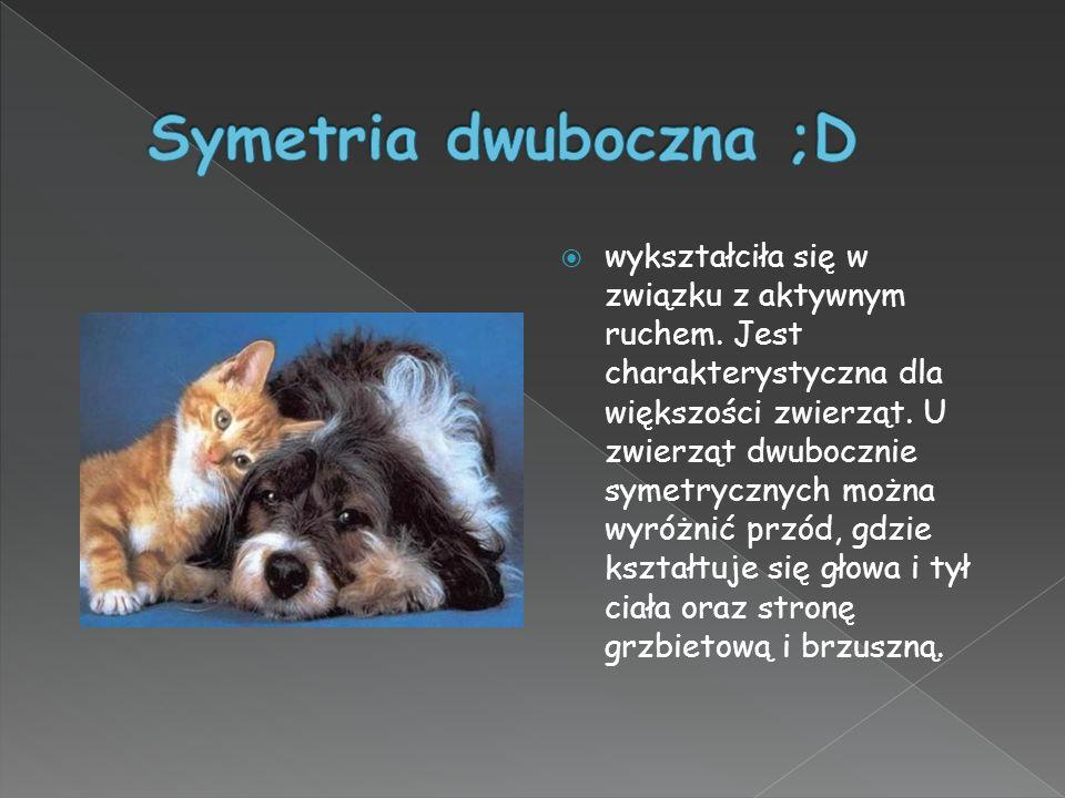 Symetria dwuboczna ;D