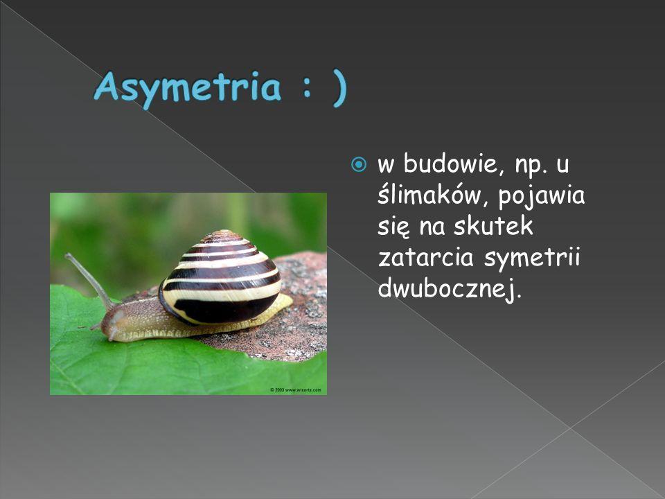 Asymetria : ) w budowie, np. u ślimaków, pojawia się na skutek zatarcia symetrii dwubocznej.