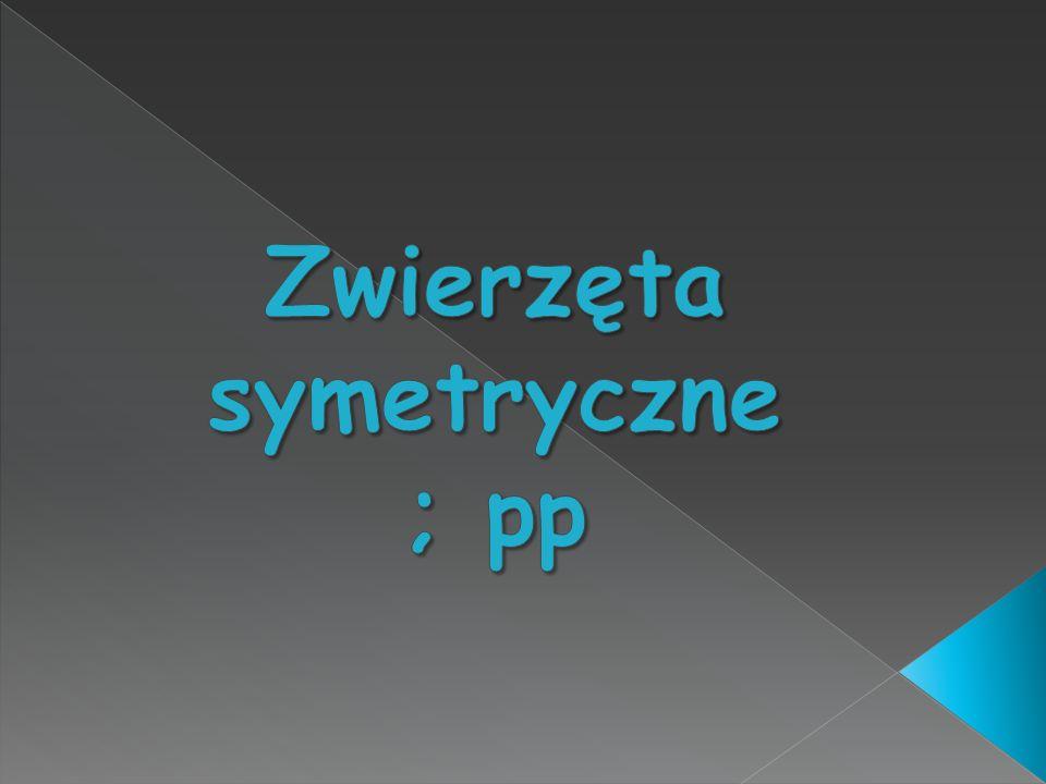 Zwierzęta symetryczne ; pp