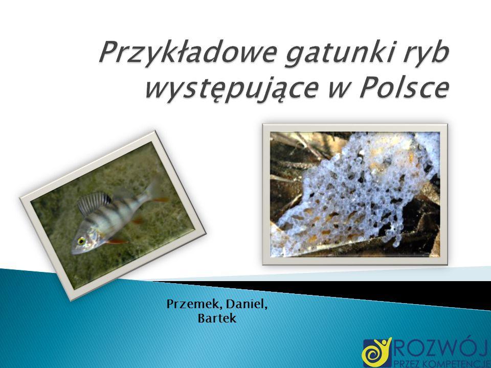 Przykładowe gatunki ryb występujące w Polsce