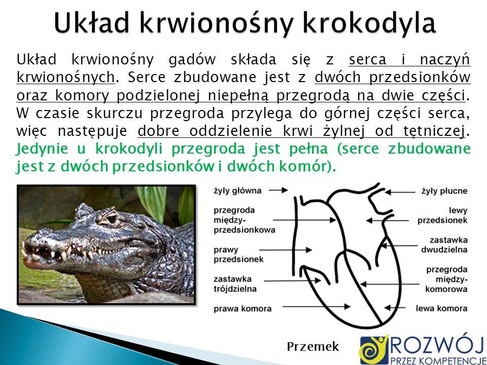 Układ krwionośny krokodyla