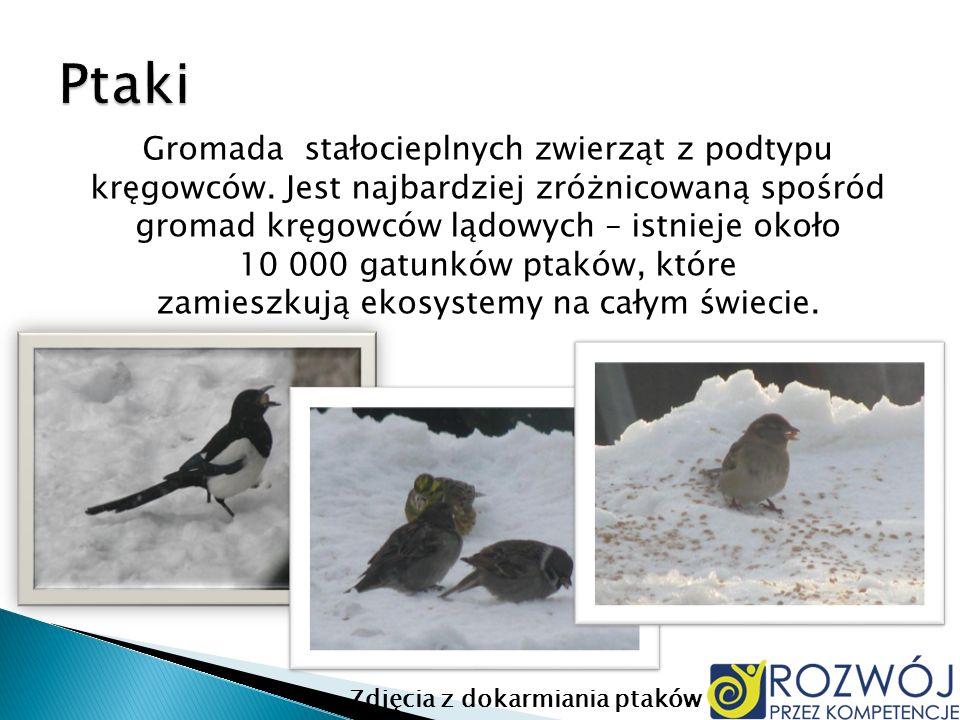 Zdjęcia z dokarmiania ptaków