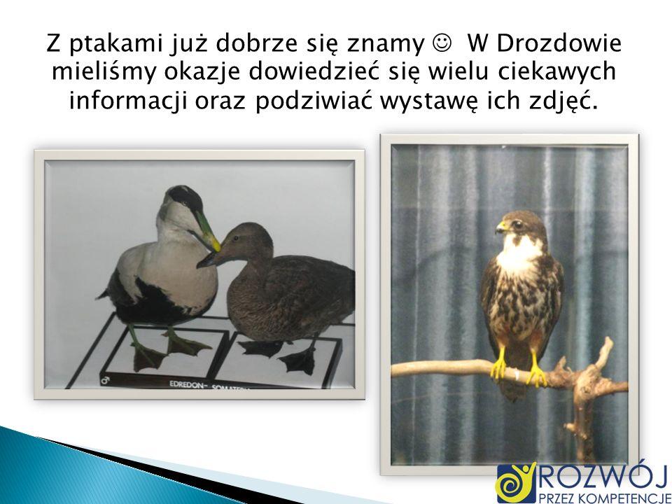 Z ptakami już dobrze się znamy  W Drozdowie mieliśmy okazje dowiedzieć się wielu ciekawych informacji oraz podziwiać wystawę ich zdjęć.