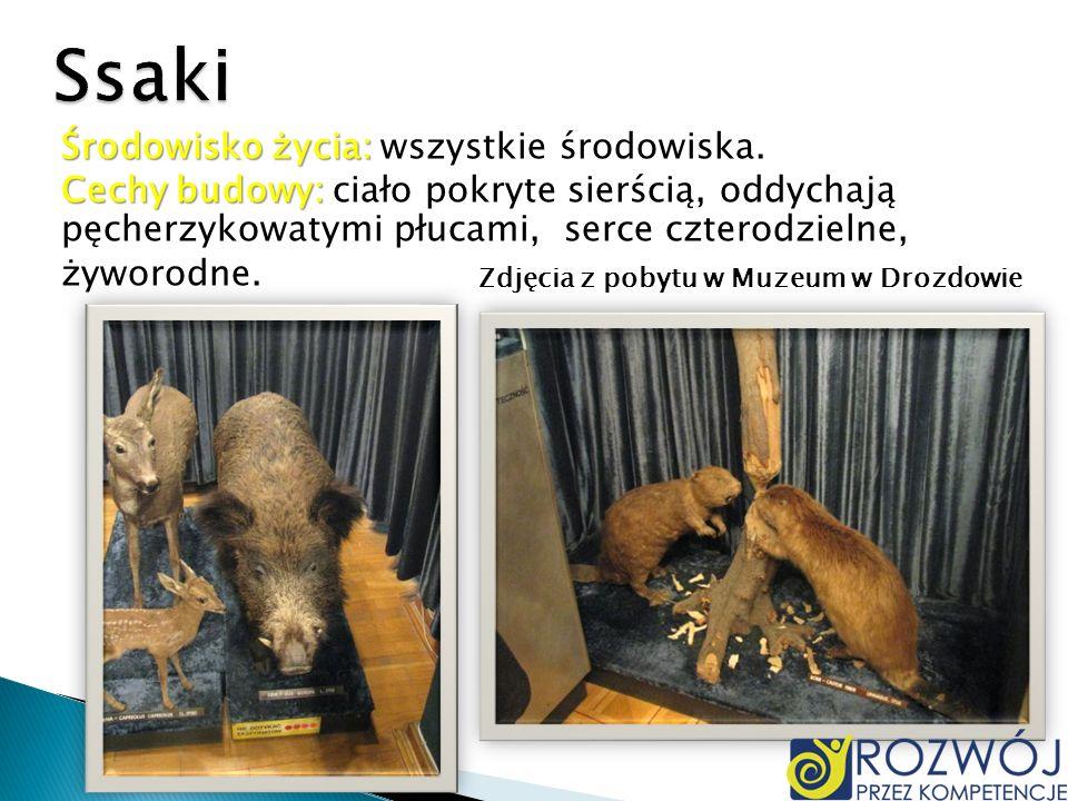 Zdjęcia z pobytu w Muzeum w Drozdowie