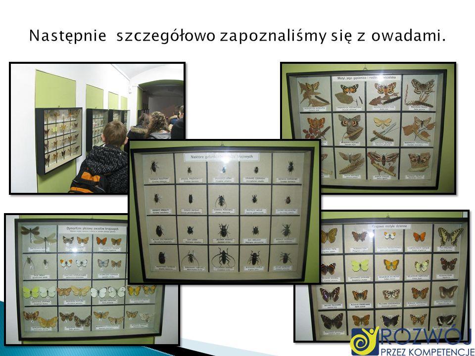 Następnie szczegółowo zapoznaliśmy się z owadami.