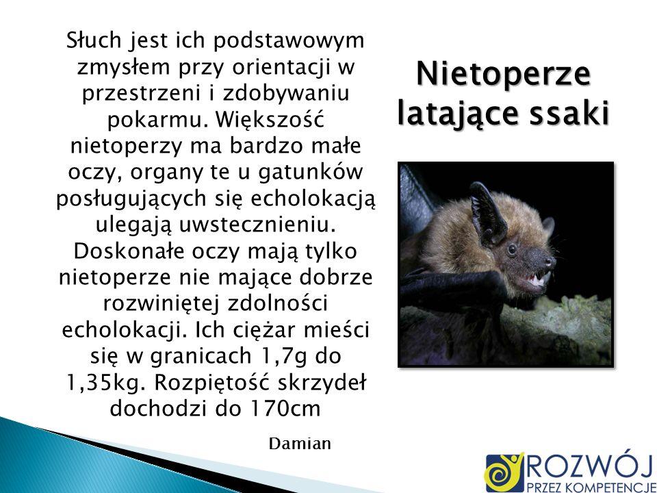 Nietoperze latające ssaki