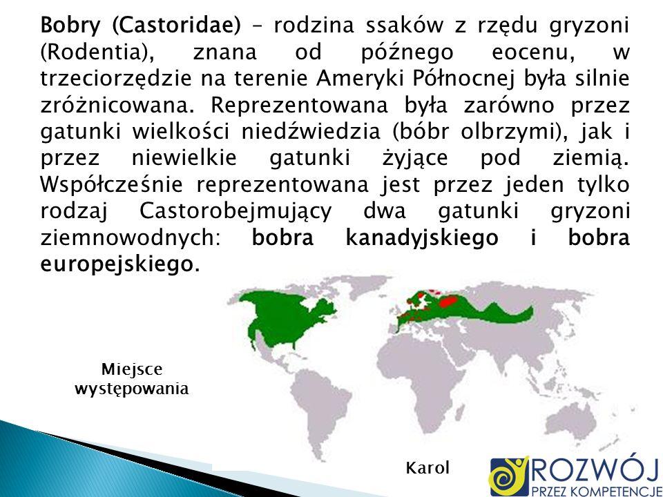 Bobry (Castoridae) – rodzina ssaków z rzędu gryzoni (Rodentia), znana od późnego eocenu, w trzeciorzędzie na terenie Ameryki Północnej była silnie zróżnicowana. Reprezentowana była zarówno przez gatunki wielkości niedźwiedzia (bóbr olbrzymi), jak i przez niewielkie gatunki żyjące pod ziemią. Współcześnie reprezentowana jest przez jeden tylko rodzaj Castorobejmujący dwa gatunki gryzoni ziemnowodnych: bobra kanadyjskiego i bobra europejskiego.