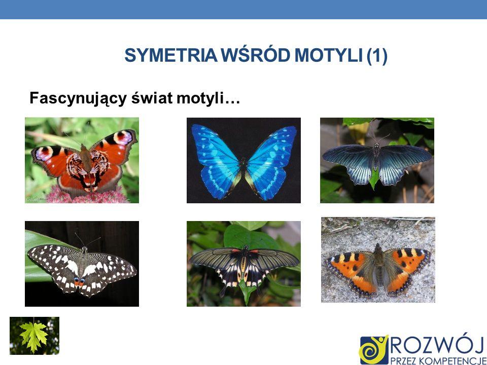Symetria wśród motyli (1)