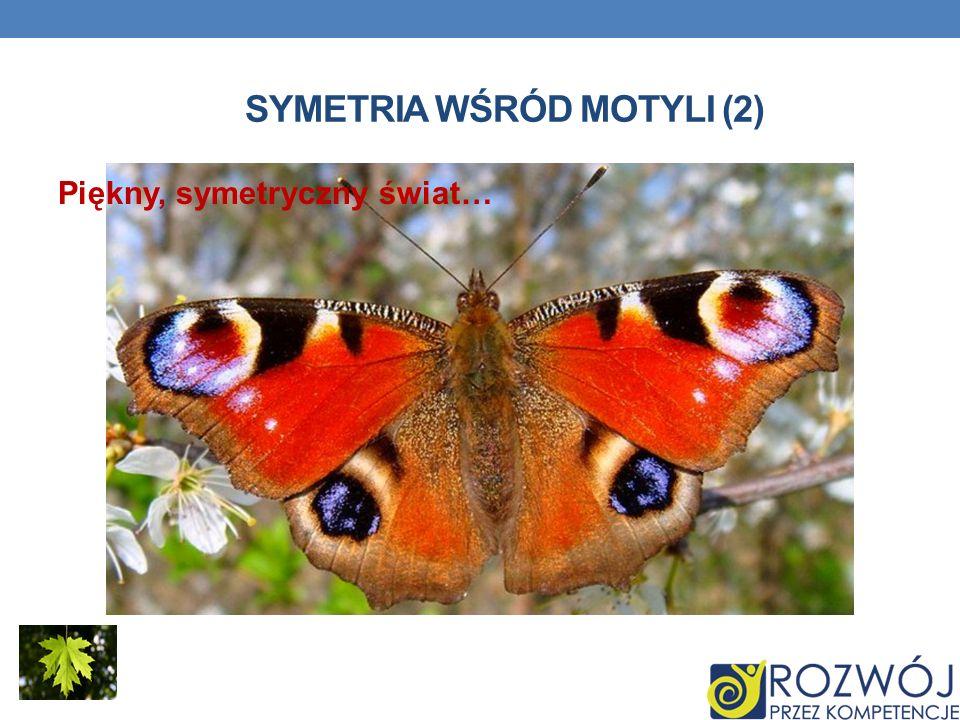 Symetria wśród motyli (2)